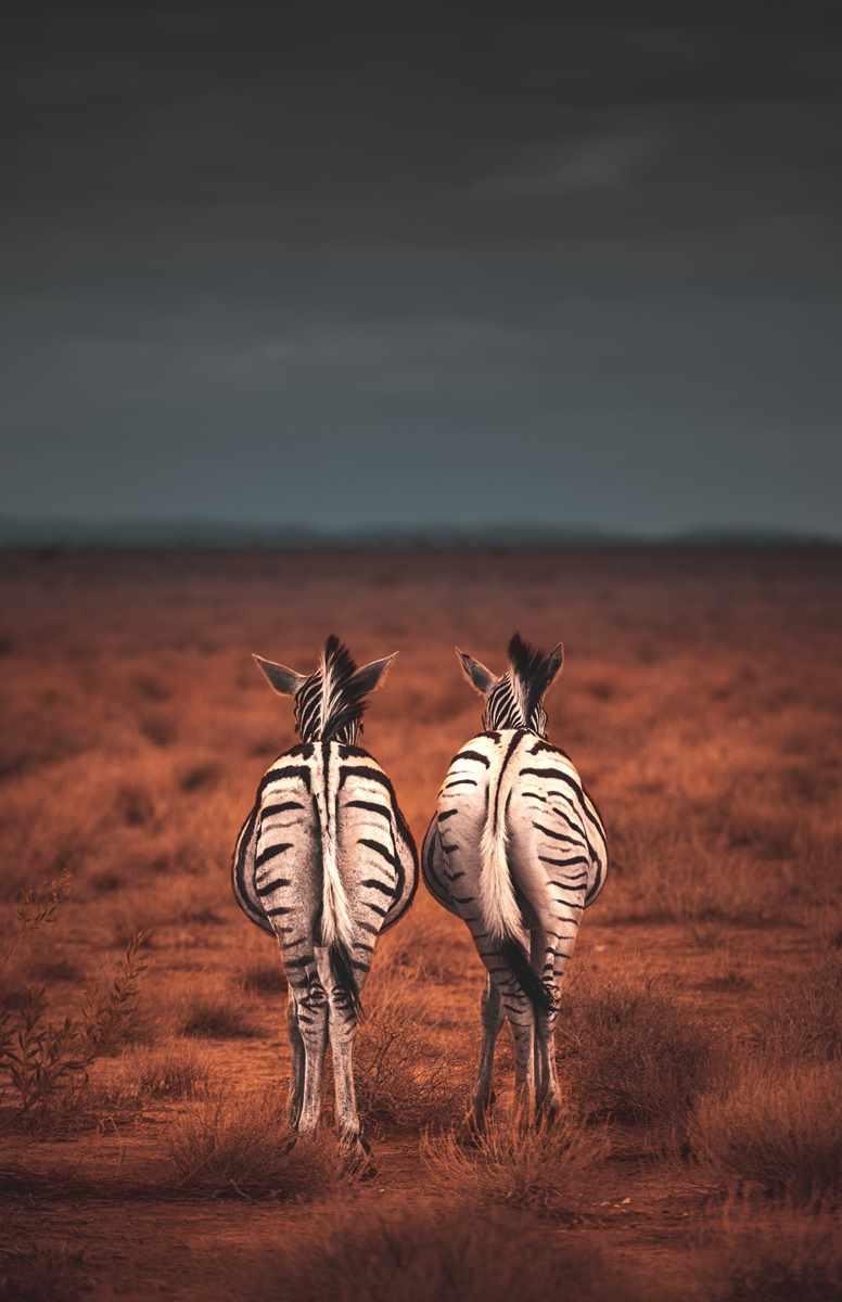 Heiraten in Namibia